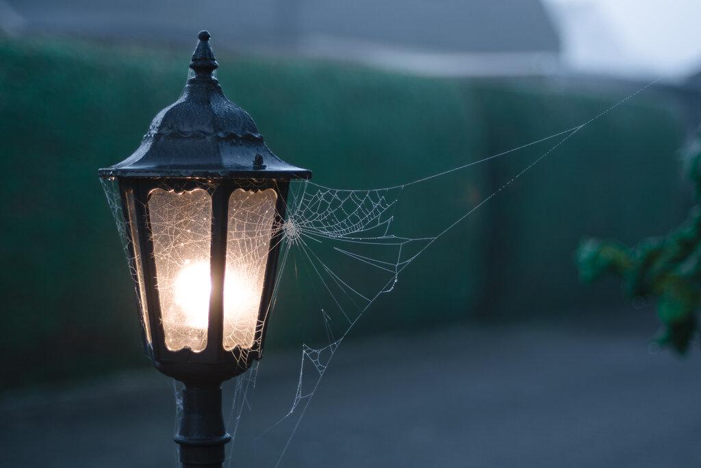 Lampe mit Spinnenweben